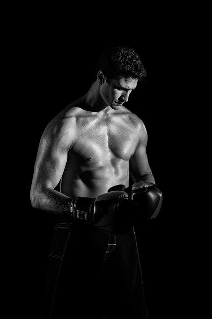 Profi boxer.jpg